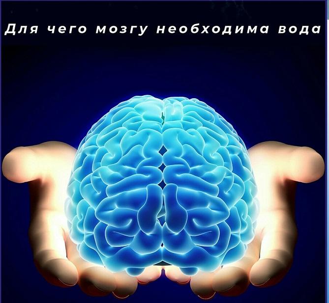 Полезность воды для головного мозга